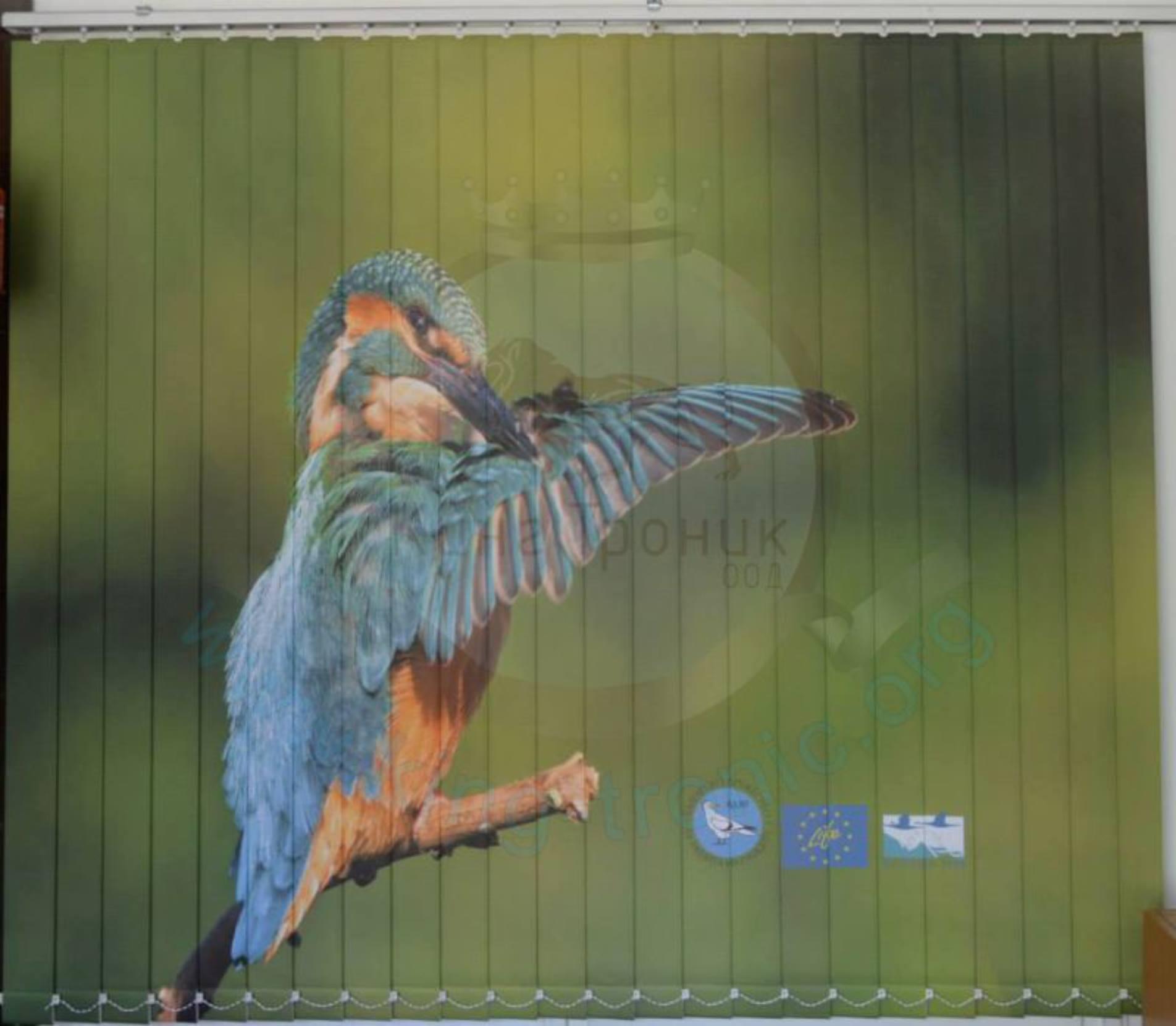 Вертикална фото щора - Индивидуален проект - Земеродно рибарче - Бургас!